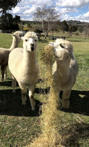 Clearview Alpacas - Accommodation Find