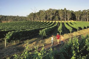 Margaret River Caves Wine and Cape Leeuwin Lighthouse Tour from Perth - Accommodation Find