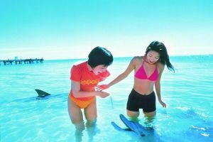Monkey Mia Dolphins  Shark Bay Air Tour From Perth - Accommodation Find