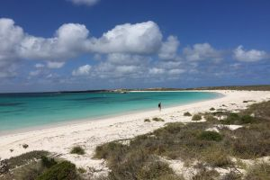Abrolhos Island Half Day Fly and Flipper - Accommodation Find