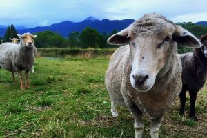Trevena Glen Farm Animal Experience - Accommodation Find