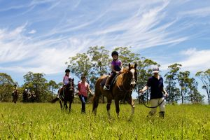 Port Macquarie Horse Riding Centre - Accommodation Find
